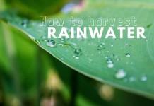 ใช้ประโยชน์จากน้ำฝน